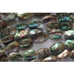 Baby Abalone shell 16-22mm